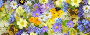 10+ Frasi sui Fiori e la Primavera
