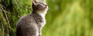 160 Frasi sui Gatti