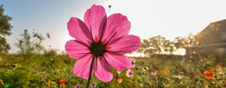 Poesie sui fiori